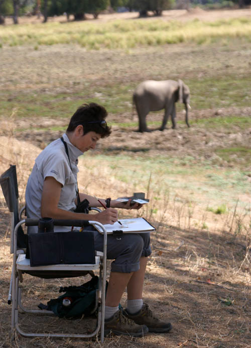 Alison Nicholls sketching in Mana Pools, Zimbabwe
