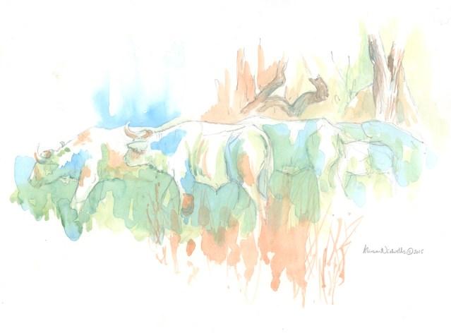 Buffalo Herd field sketch © Alison Nicholls 2015