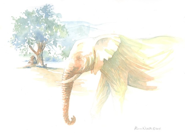Elephant Bull © Alison Nicholls 2015