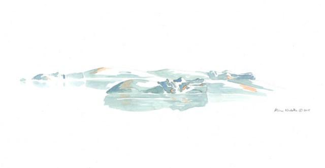 Hippo Pod Field Sketch by Alison Nicholls ©2015