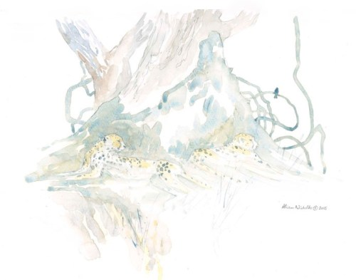Creepers and Cheetahs Field Sketch, watercolor by Alison Nicholls