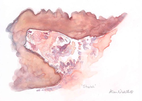 A stretching lioness, painted in watercolor by Alison Nicholls