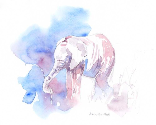 Elephant Calf Field Sketch by Alison Nicholls ©2016