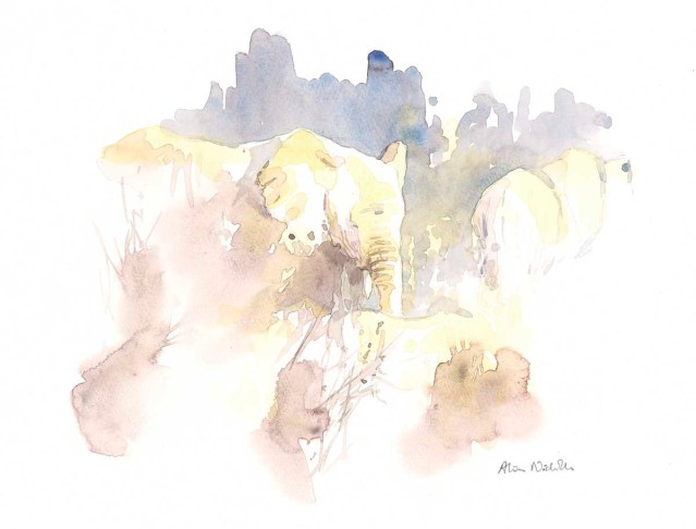 Elephants in Brown, field sketch by Alison Nicholls