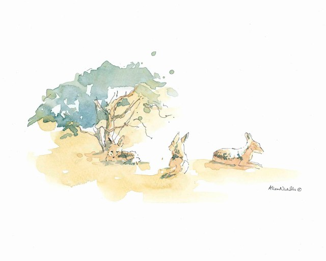 Black-backed Jackals by Alison Nicholls