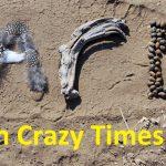 Art in Crazy Times - Alison Nicholls