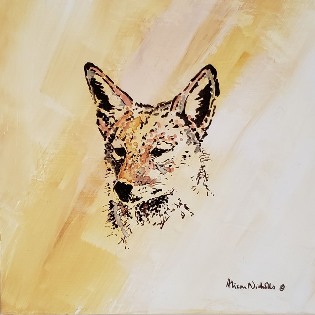 Black-backed jackal by Alison Nicholls