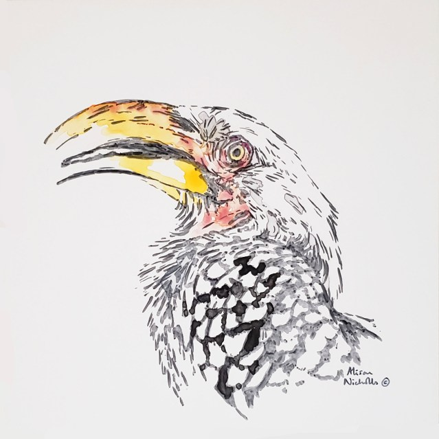 Yellow-billed Hornbill by Alison Nicholls