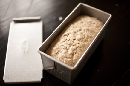 Pullman Loaf | Artisan Bread in Five Minutes a Day