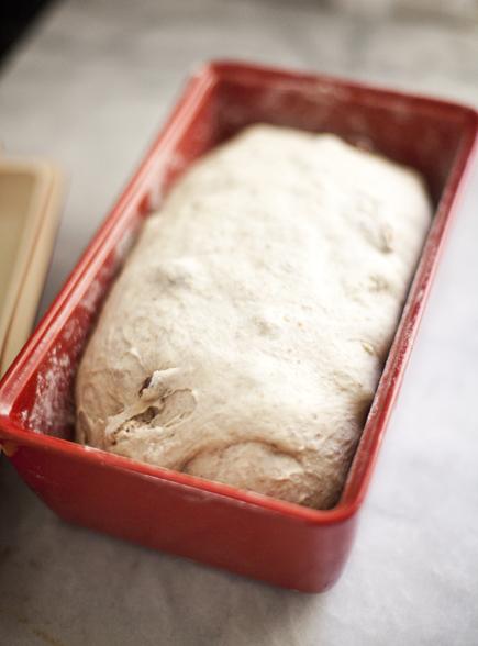 Raisin Walnut Bread Dough Rising | Artisan Bread in Five Minutes a Day