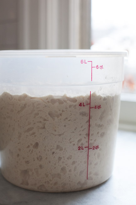 Active Bread Dough in a Container| Artisan Bread in Five Minutes a Day