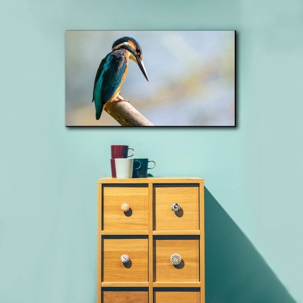 Canvas prints bird