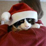 Jasmine at Christmas