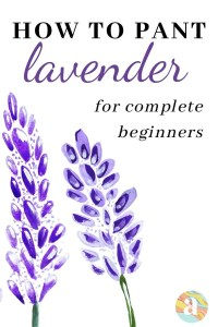 how to paint lavender in watercolor