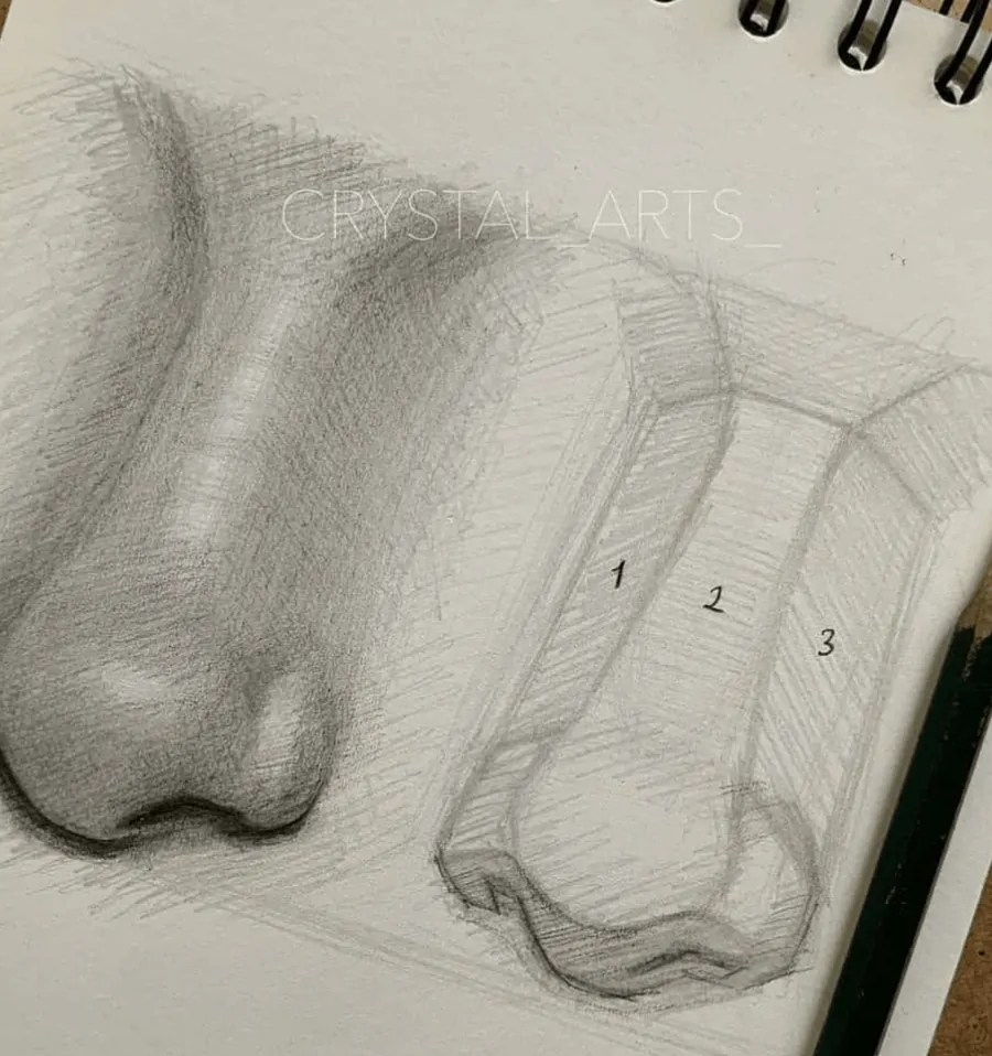 nose drawing 3d