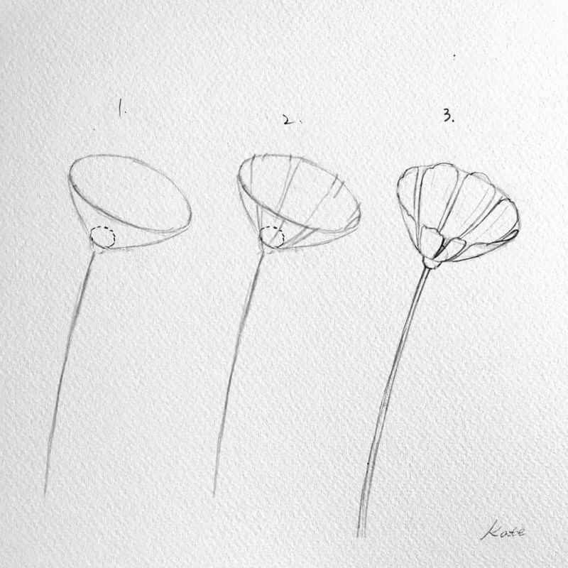 How to draw flowers for beginners? 75
