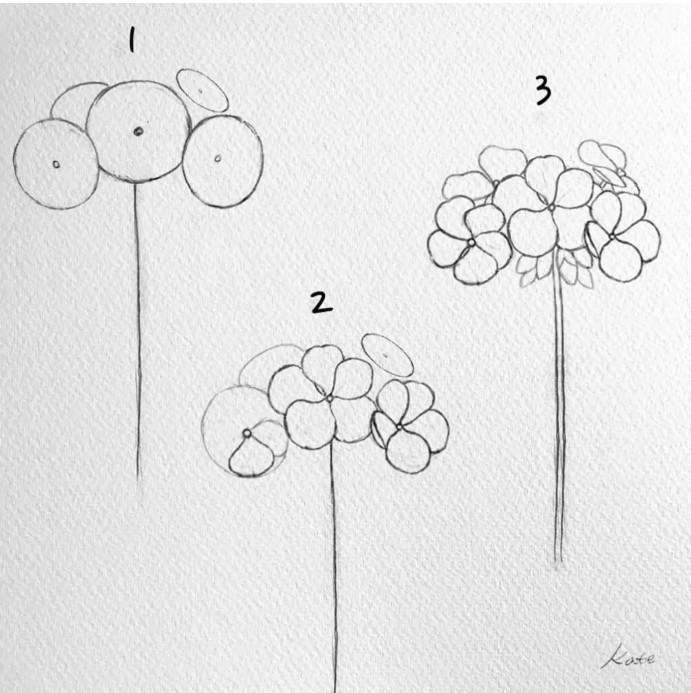 how to draw a geranium