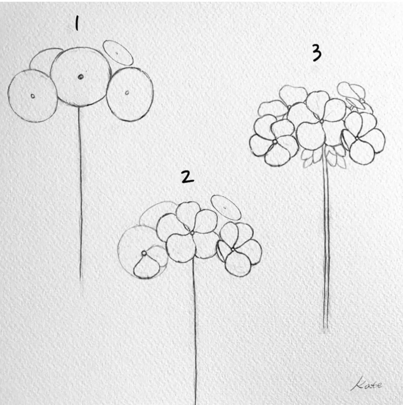 how to draw a geranium