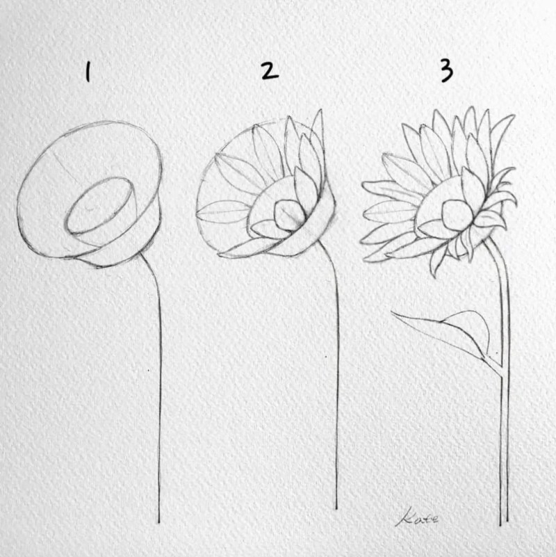 12 Flower Drawing Easy Tutorials For Beginners To Draw