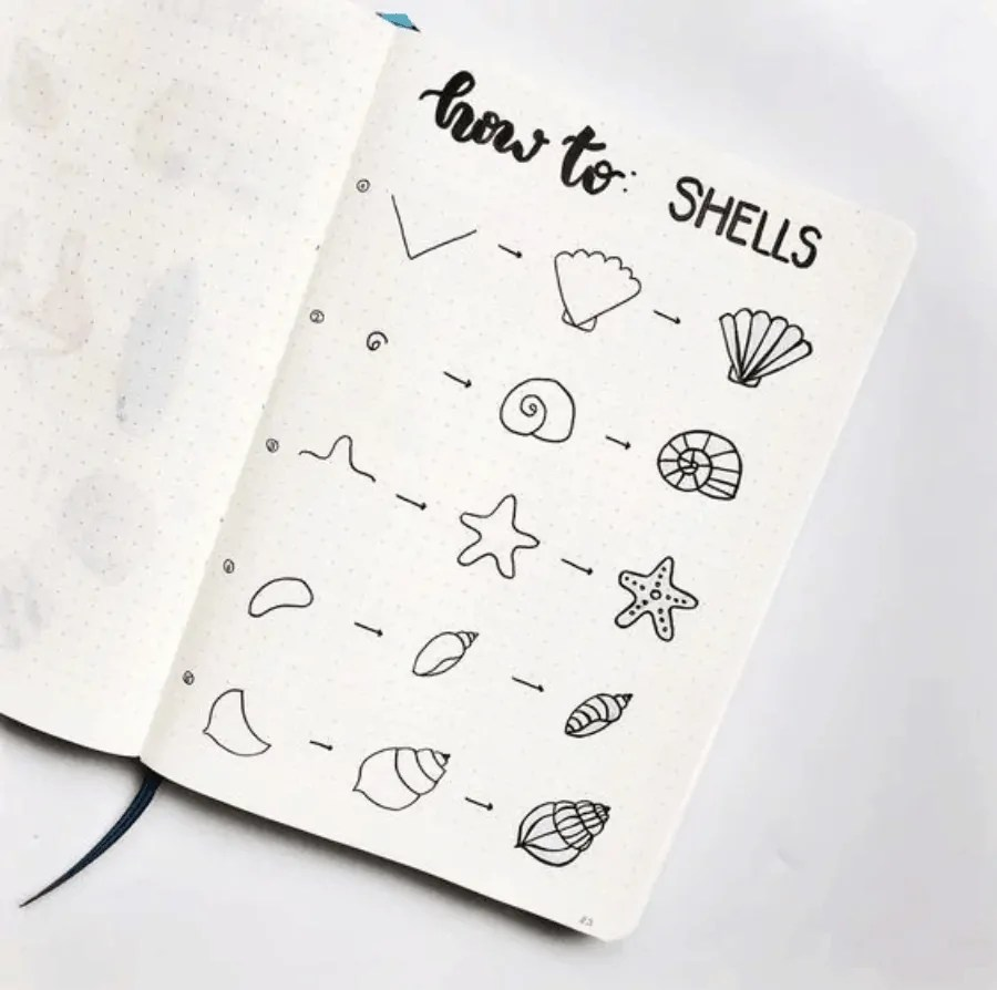 how to draw shells?