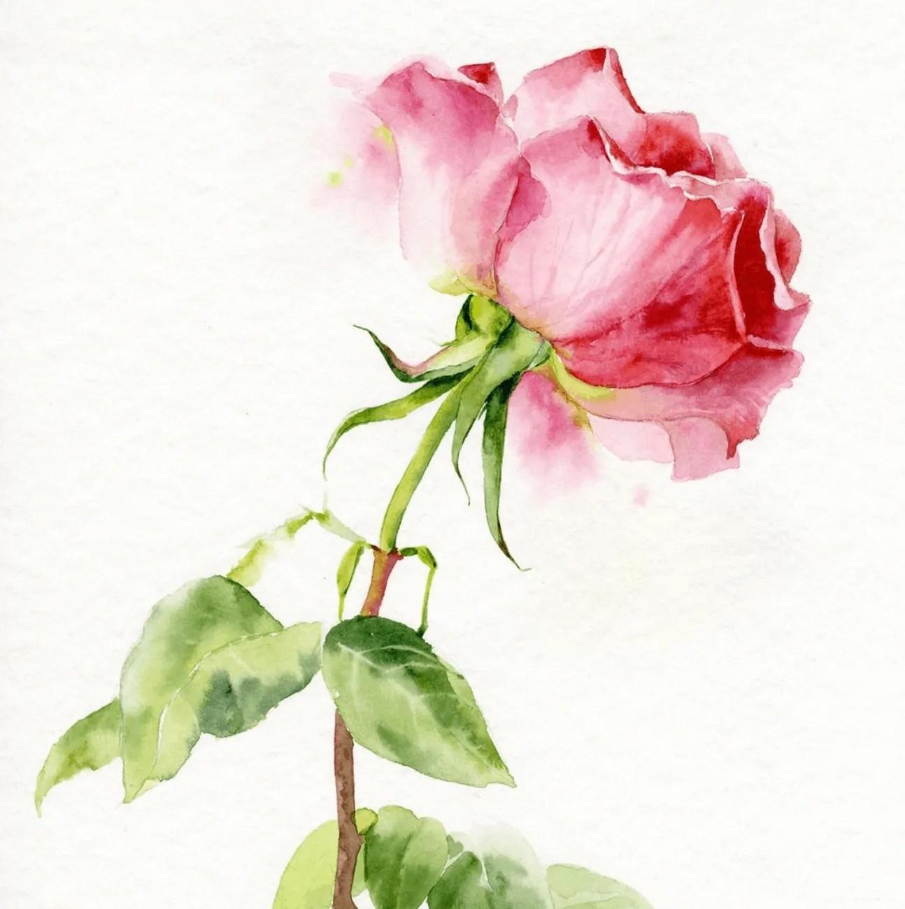 rose watercolor ideas