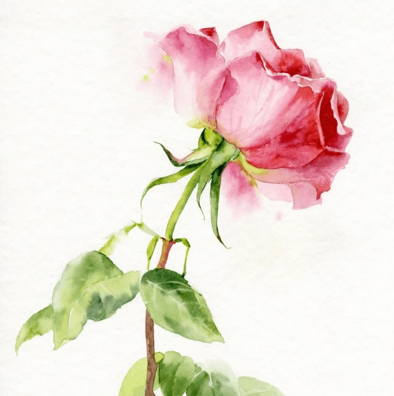 rose watercolor ideas