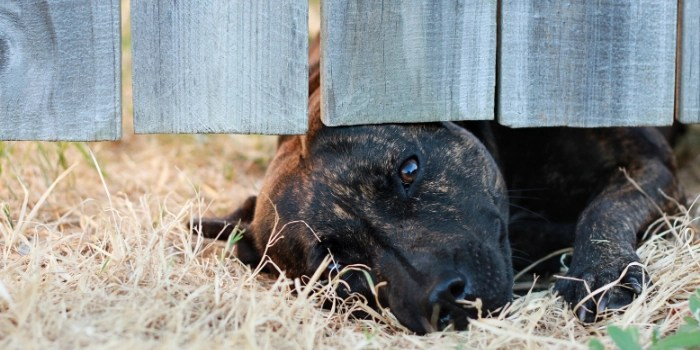 Cute dog looking under wooden fence