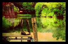 A sense of grey - Irene Perin | Sezione Parco Agro-Paesaggistico tra la Brenta e il Bacchiglione - 1° PREMIO
