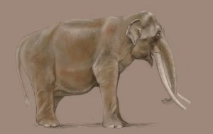 digital drawing of an Indian Elephant