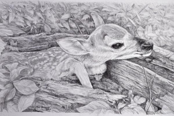 a drawing of a newborn fawn