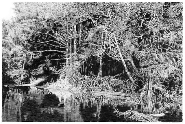"Artist: Roland Descombes City: Zephryhills, FL Title: Cypress Roots Medium: Pencil Size: 17"" x 25"""