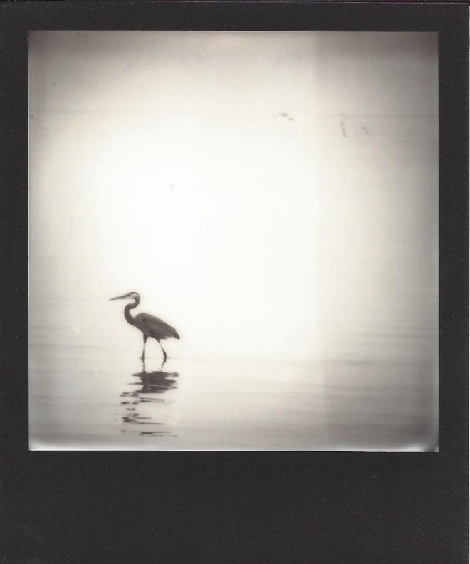 Title:Texas Coast 05 Medium:Instant Film Photography Size:3.5 x 4 inches