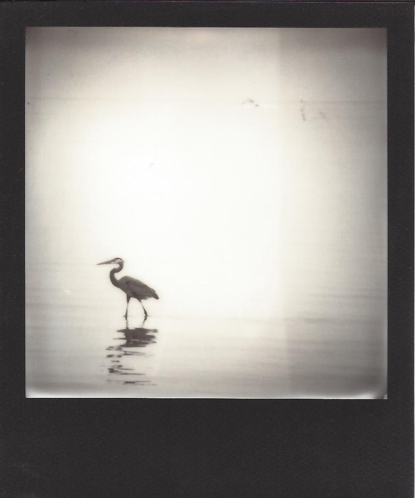 Title:Texas Coast 05 Medium:	Instant Film Photography Size:	3.5 x 4 inches