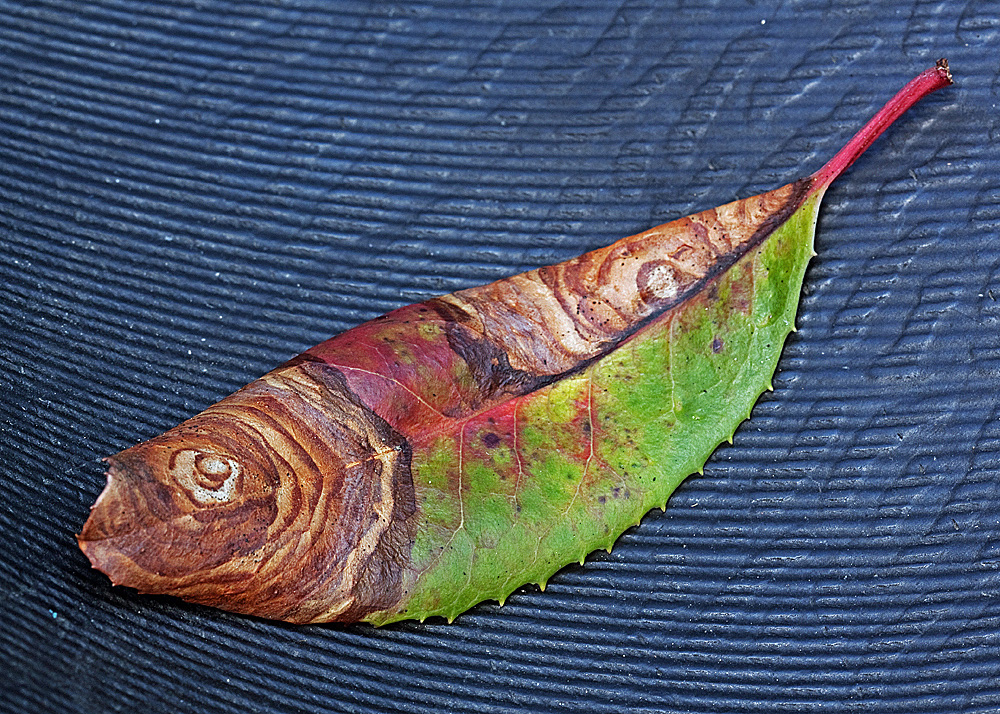 "Title:Toyon Fish Medium:	Photography Size:	16""x20"""
