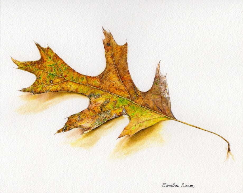 Title:Simply A Leaf Medium:	Watercolor Size:	8 x 10