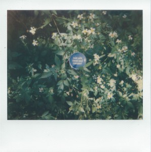 """Title Just Add Meat and Tomato! Medium Polaroid Size 4 x 4.1"""""""