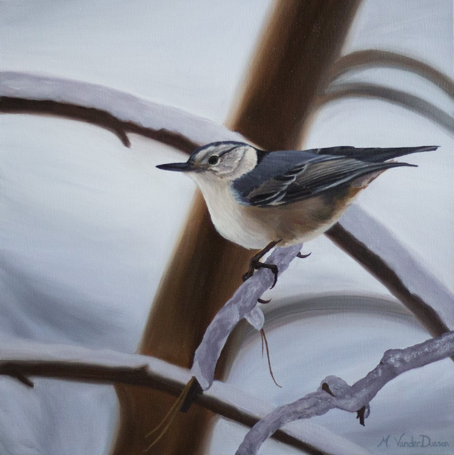 "Title Nuthatch Medium Oil Size 12"" x 12"""