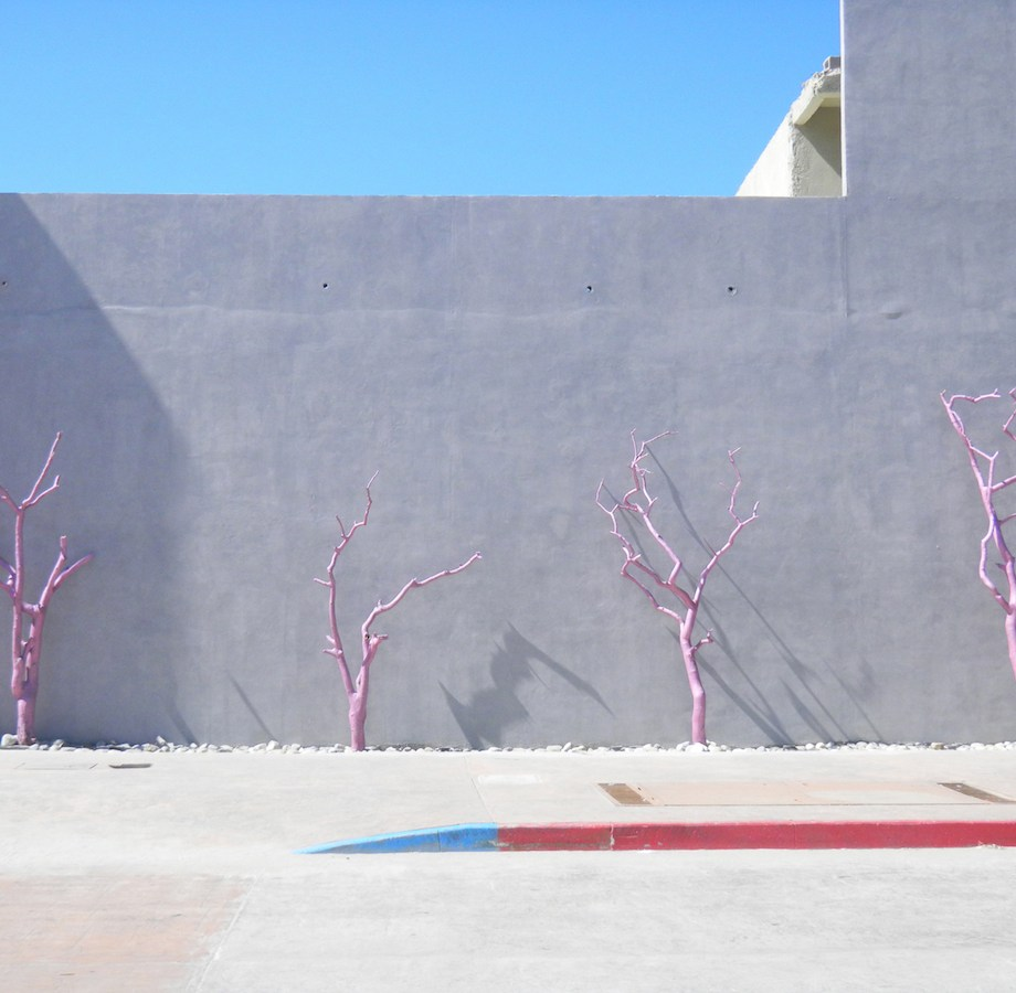 Title Pink Trees Medium Photography Size 17x22""