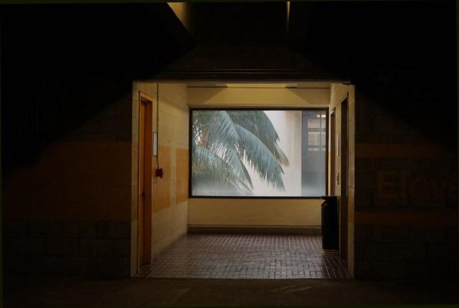 "Title Window Palm Medium Photography Size 17x22"""