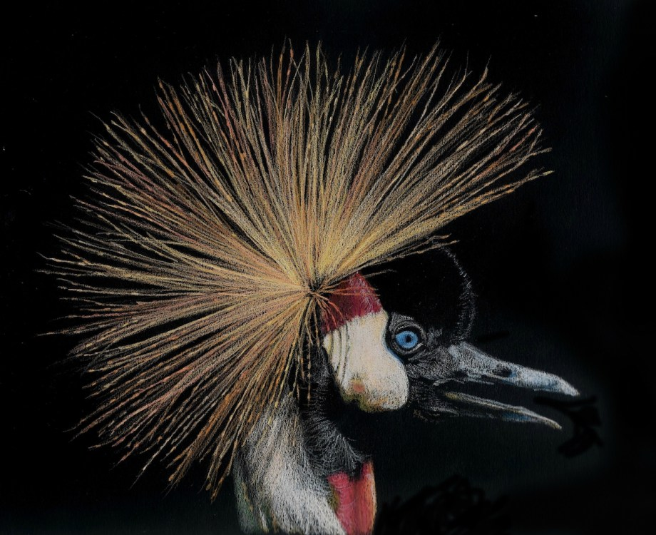 Title Crowned Crane Medium colored pencil Size 20x30 cm