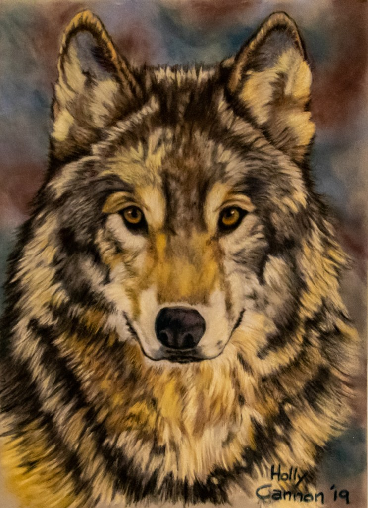 "Wolf Portrait Medium pastels on velour Size 9"" x 14"""