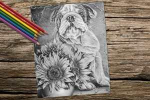 bulldogwithsunflowers_8x10_coloring_onwood