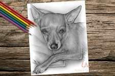 chihuahuasitting_coloringpage-on-wood
