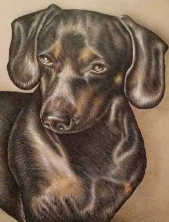 """Dachshund"" 8""x10"" Colored Pencil on Paper, SOLD"