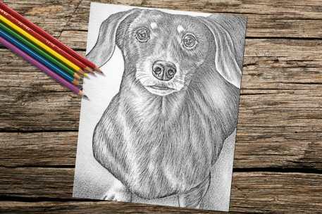 dachshundlookingup_8x10_coloring_onwood