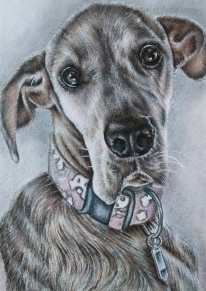 """""""Great Dane"""" 5""""x7"""" Colored Pencil on Paper, SOLD"""