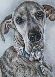 """Great Dane"" 5""x7"" Colored Pencil on Paper, SOLD"