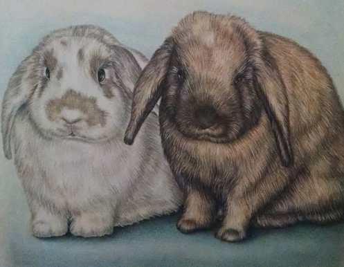 """Drawing of Two Bunnies"" 8""x10"", Colored Pencil on Paper, SOLD"
