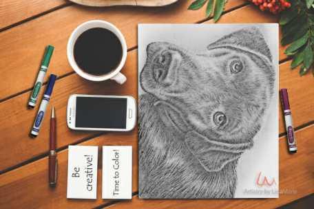labrador_2_-on-table