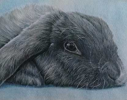 """Gray Bunny"" Colored Pencil on Paper, 8""x10"", SOLD"